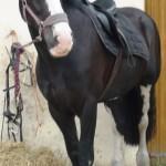 Largest horse!