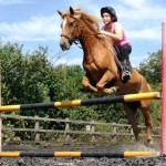 Ponies for Jumping