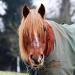 Lovely little mares!