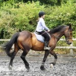 More advanced horses for flat work or jumping